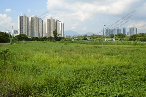 棄耕農田 Abandoned farmland