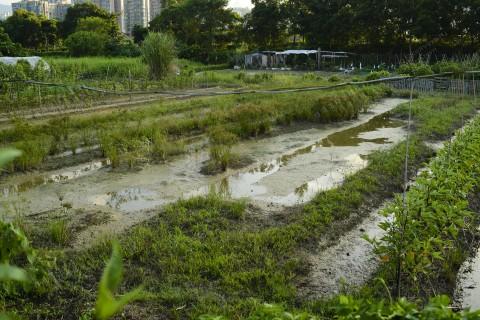 耕地 Farmland