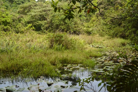 人工水池 Man-made pond