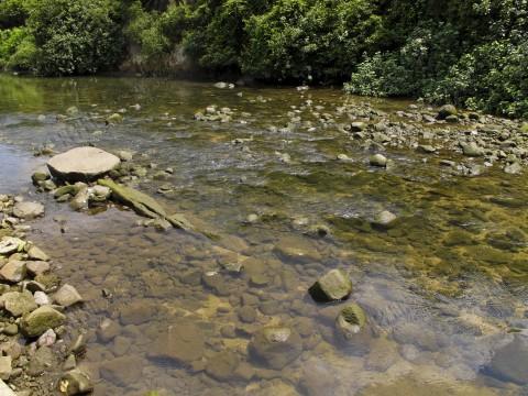 河口 Estuaries