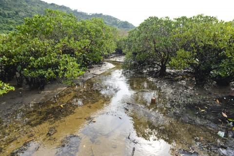 紅樹林 Mangrove