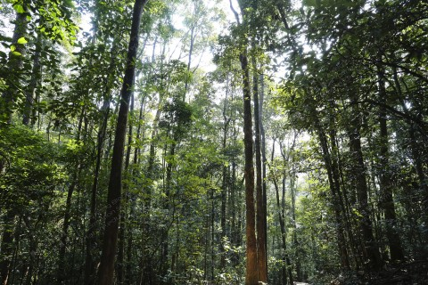 植林 Plantation
