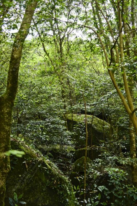 次生林 Secondary forest