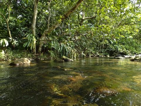 淡水河溪 Freshwater stream
