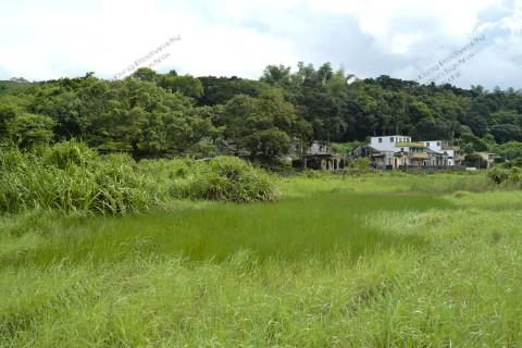 鹹淡水濕地 Brackish wetland