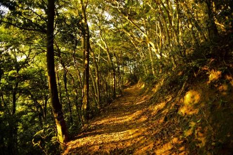 夕陽下的樹林 Forest under the setting sun