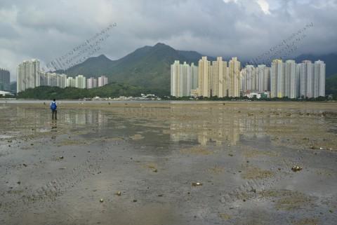 泥灘 Mudflat