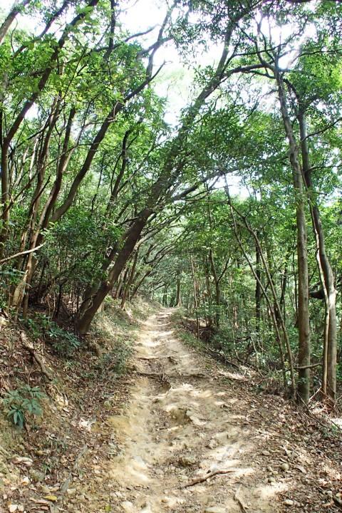林道 Forest Trail