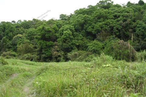風水林 Fung Shui Wood