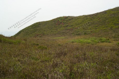 草地 Grassland