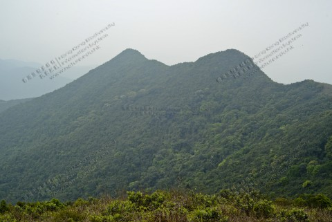 次生林 Secondary forest