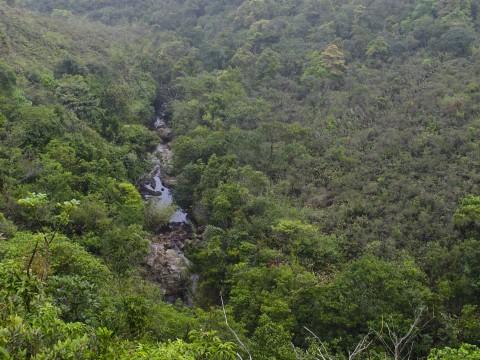 淡水河溪及灌木叢 Freshwater stream and shrubland