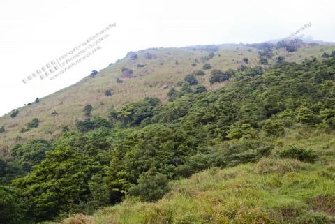 高山生境 Montane habitats