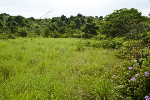 淡水濕地 Freshwater wetland