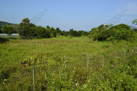 荒廢農田 Abandoned farmland